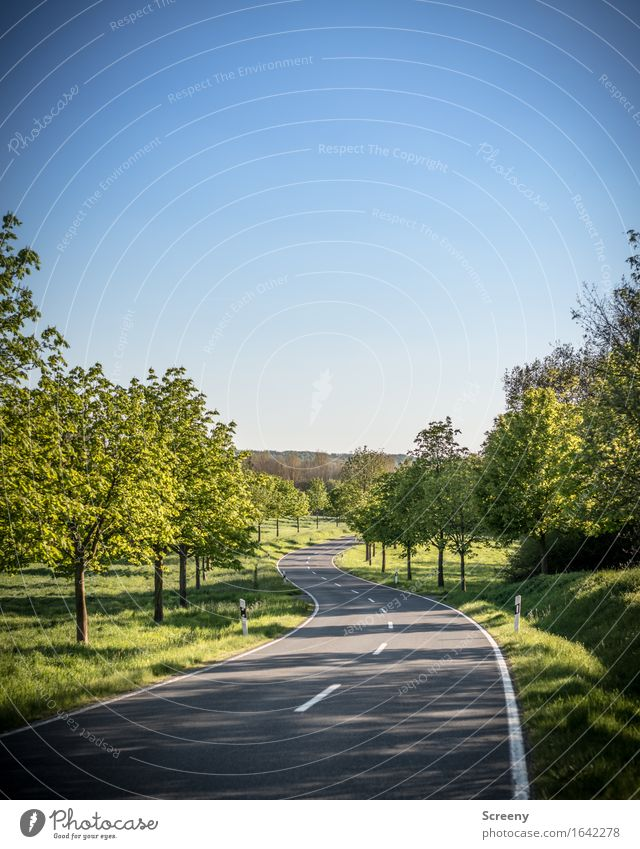 Sky Nature Vacation & Travel Plant Summer Sun Tree Landscape Street Spring Lanes & trails Meadow Grass Freedom Field Bushes