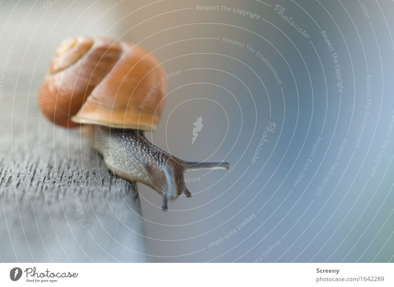 You want me to go down there? Nature Animal Garden Snail 1 Crawl Small Brown Serene Patient Calm Slimy Snail shell Height Fear of heights Corner Colour photo