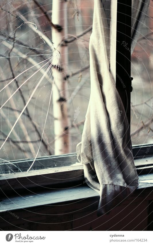 Nature Beautiful Tree Calm Loneliness Life Window Dream Sadness Moody Esthetic Safety Hope Living or residing Romance Change