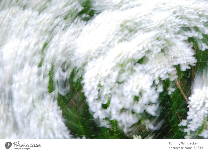 spin cycle Abstract Motion blur Nature Plant Spring Summer Beautiful weather Gale Flower Bushes Blossom Foliage plant Movement Blossoming White Spring fever