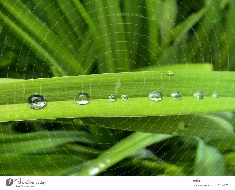 collecting channel Leaf Landscape sheet Gutter Furrow Rain Water Drops of water Row caught