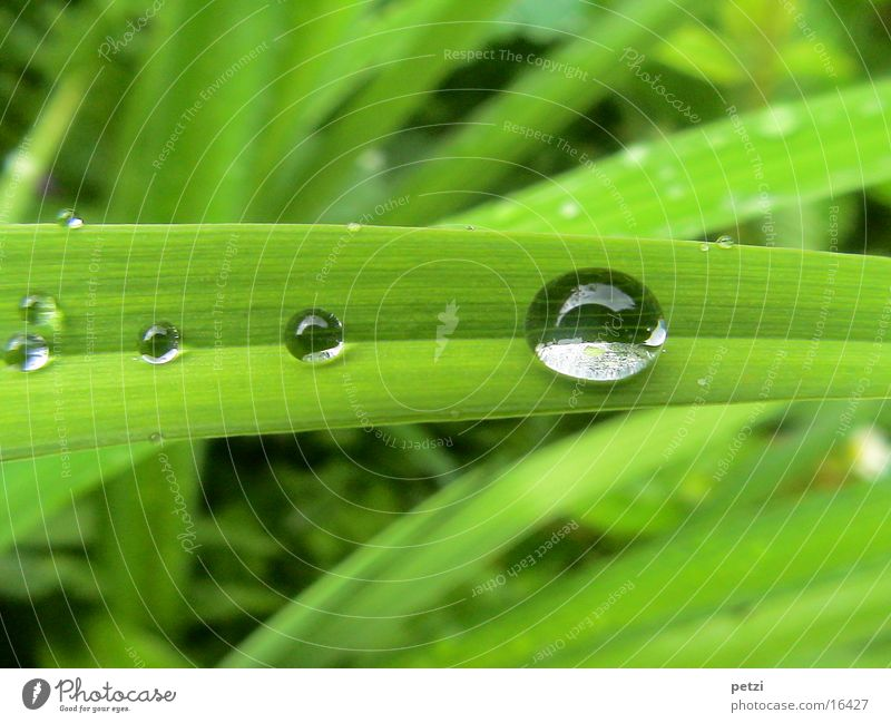 Drip, drip, drip. Rope Drops of water Rain Leaf Green Furrow Wide caught Colour photo Exterior shot Detail Macro (Extreme close-up) Deserted Copy Space top