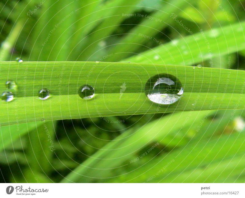 Green Leaf Rain Drops of water Rope Furrow Wide