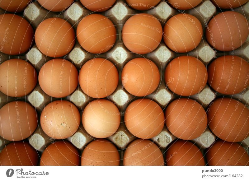 Eggs from above Colour photo Close-up Deserted Copy Space left Copy Space right Copy Space top Copy Space bottom Copy Space middle Bird's-eye view Food