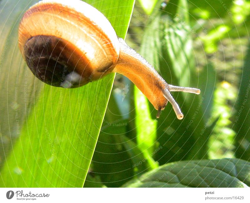 Green Leaf Eyes Snail Feeler Shaft of light Snail shell