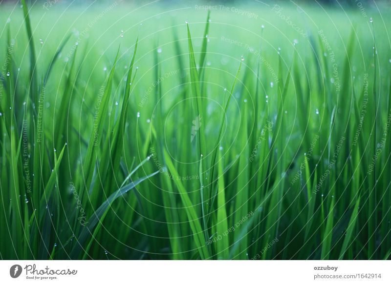 Grass Nature Plant Climate Fog Foliage plant Wild plant Fresh Green Colour Dew Colour photo Pattern Structures and shapes Morning Central perspective