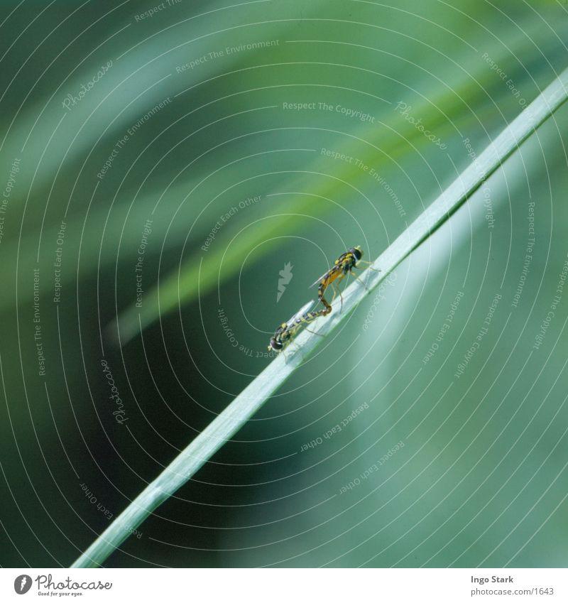 partner marketing Insect Symbols and metaphors Fertilization colour mood