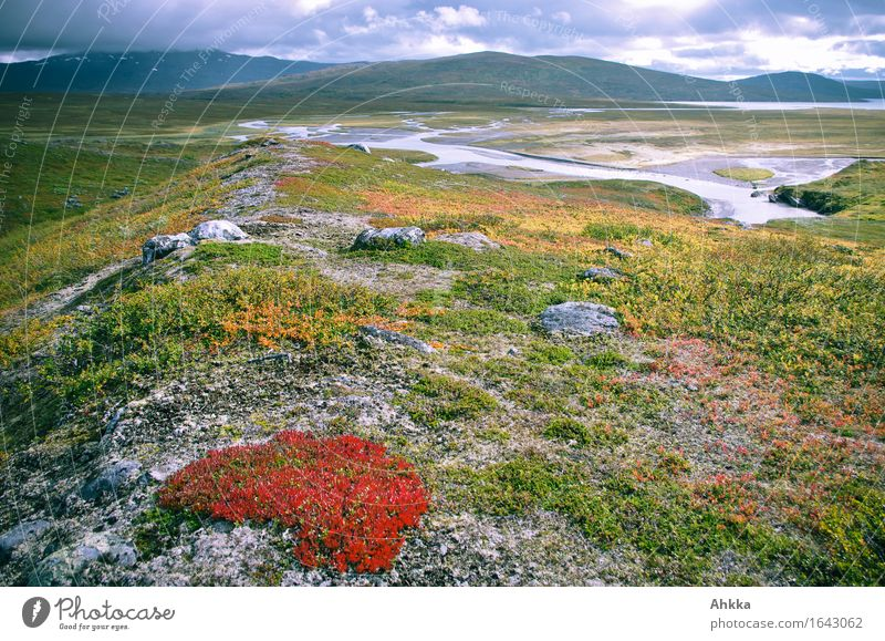 scene Harmonious Well-being Relaxation Calm Fragrance Far-off places Autumn Moss Mountain Delta Fjeld Blue Yellow Green Orange Red Uniqueness Creativity