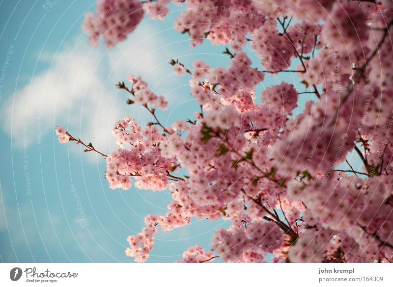 Nature Beautiful Sky Tree Blue Plant Red Clouds Animal Blossom Spring Happy Pink Environment Happiness Joie de vivre (Vitality)