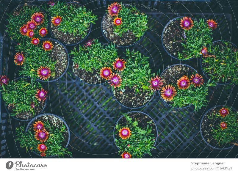 Flower Market Plant Blossom Foliage plant Blossoming flower market Flowerpot plants wax Colour photo Deserted