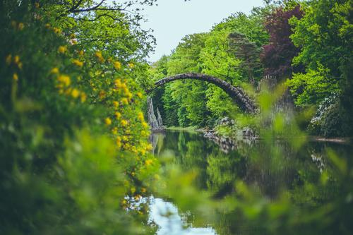 Nature Plant Summer Water Tree Architecture Spring Going Park Hiking Blossoming Observe Bridge Fragrance Pond Foliage plant