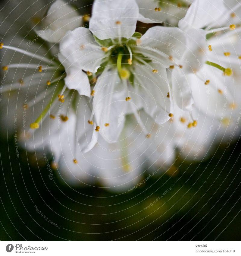 White Tree Flower Plant Blossom Esthetic Bushes Delicate