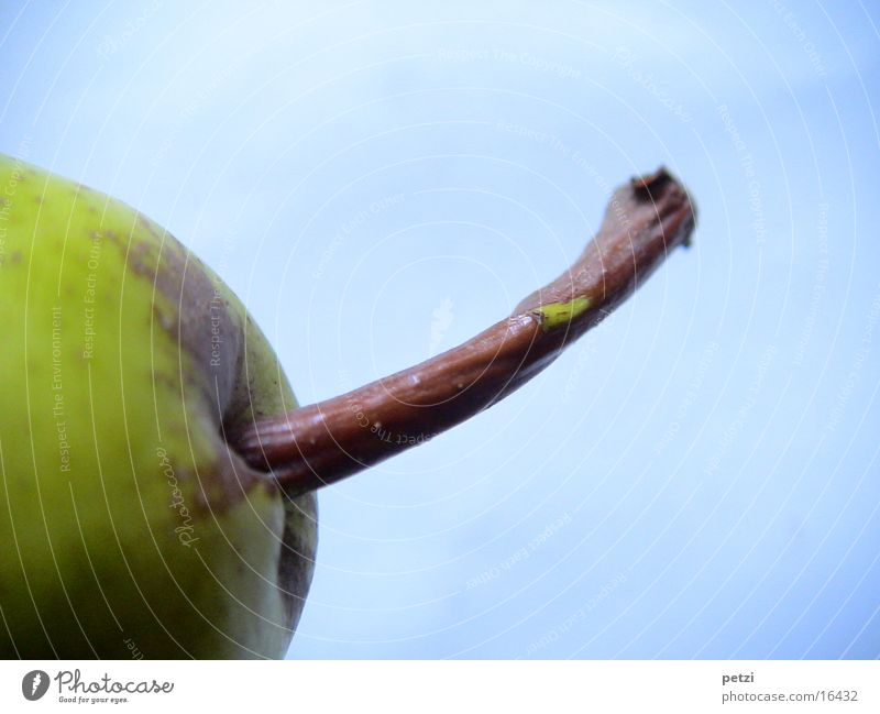 Stem of a pear Fruit Wood Blue Brown Stalk Curved Greeny-yellow Background picture Pear grooved Colour photo Exterior shot Detail Macro (Extreme close-up)