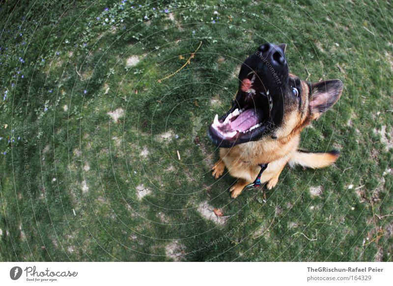 hungry dog Colour photo Exterior shot Aerial photograph Day Twilight Motion blur Bird's-eye view Animal Earth Pet Farm animal Wild animal Dog 1 Catch To feed