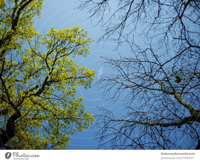 Sky Nature Blue Green Beautiful Tree Plant Leaf Environment Warmth Above Spring Wood Air Park Brown