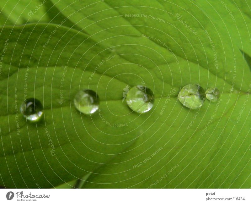 Drop in line and file..... Rope Water Drops of water Rain Leaf Green Rachis Furrow pearly Colour photo Exterior shot Detail Macro (Extreme close-up)