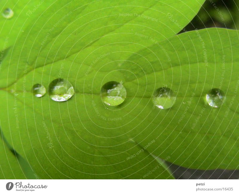 drops in a row Drops of water Rain Leaf Green Rachis Gutter 5 taupe beads Colour photo Exterior shot Copy Space top Copy Space bottom