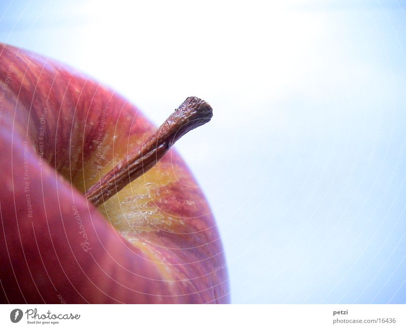 apple stalk Fruit Apple Beautiful Healthy Wood Brown Crunchy Stalk Rotated rosy-cheeked blown up Colour photo Exterior shot Copy Space right Copy Space top