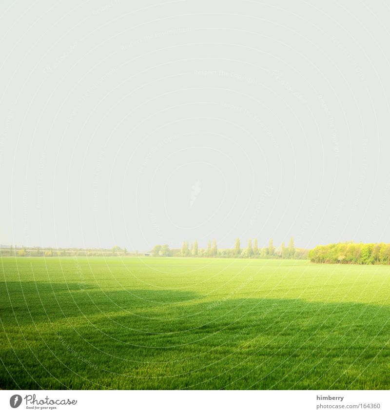 Sky Nature Green Plant Calm Relaxation Environment Landscape Meadow Life Freedom Gray Park Weather Contentment Field