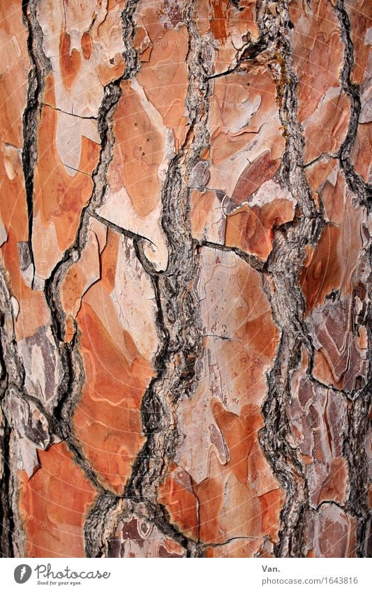 Nature Plant Summer Tree Red Wood Brown Tree trunk Crack & Rip & Tear Tree bark