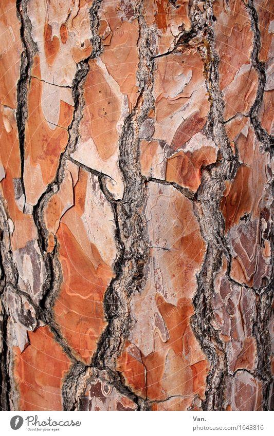 Nature Plant Summer Tree Red Wood Brown Tree trunk Crack & Rip & Tear Tree bark