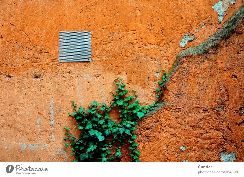 Green Red House (Residential Structure) Yellow Wall (building) Wall (barrier) Facade Climbing Ivy Board ship