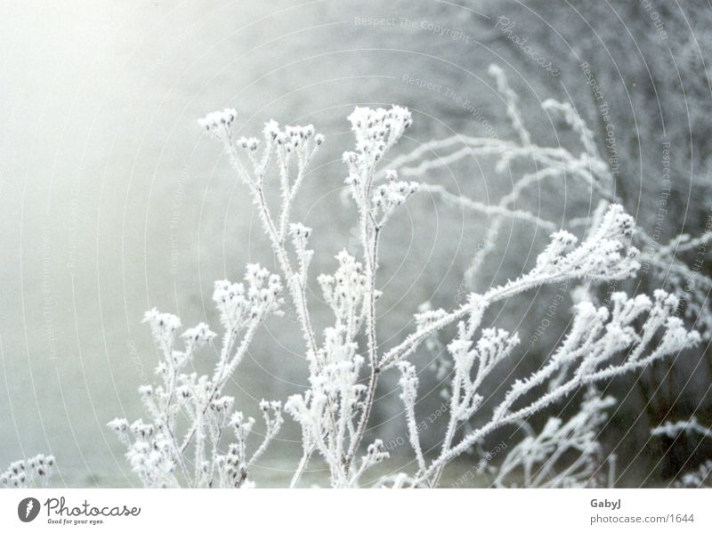winter impressions Hoar frost Winter Fog Snowscape Cold Calm Express train White Ice Branch silence