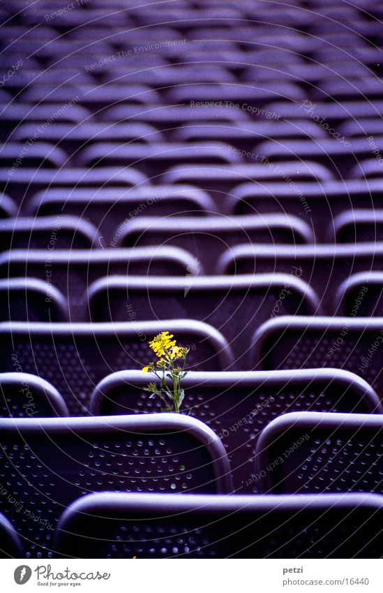 Life prevails Leisure and hobbies Armchair Flower Steel Yellow Green Violet Quarry open-air theatre Row Perforated grid. back Colour photo Exterior shot
