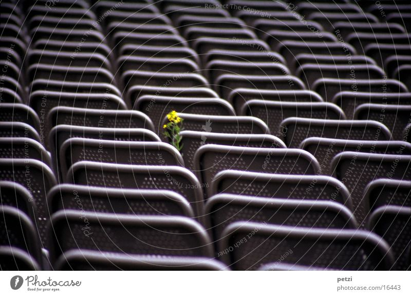 Courageous little flower Life Leisure and hobbies Armchair Flower Steel Yellow Green Quarry open-air theatre Row Perforated grid. back Colour photo