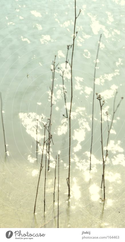 Nature Water Plant Summer Loneliness Relaxation Lake Waves Coast Trip Lakeside River bank