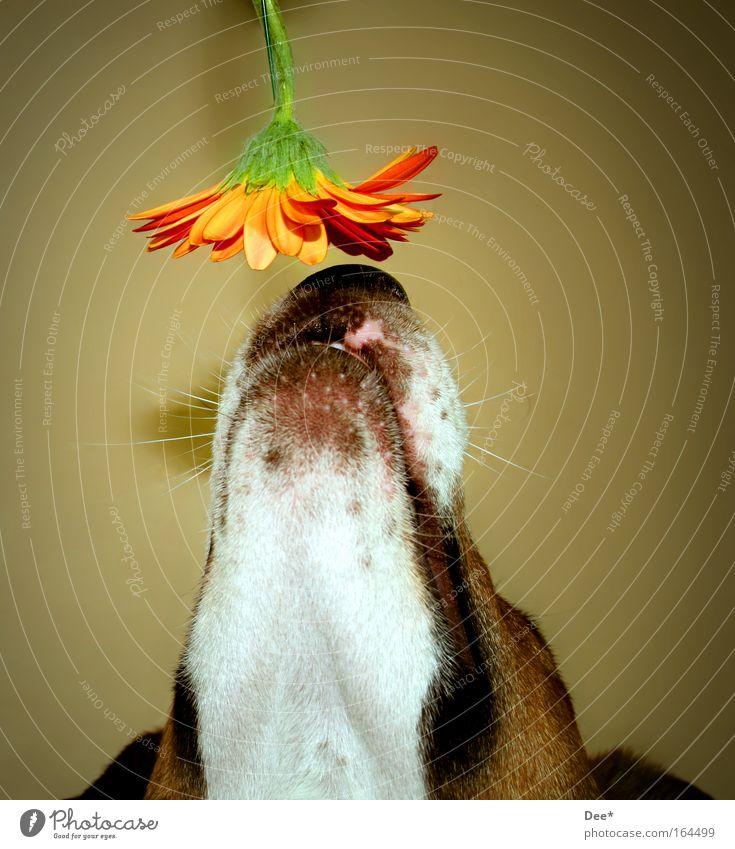 Flower Animal Blossom Dog Animal face Curiosity Fragrance Pet Interest