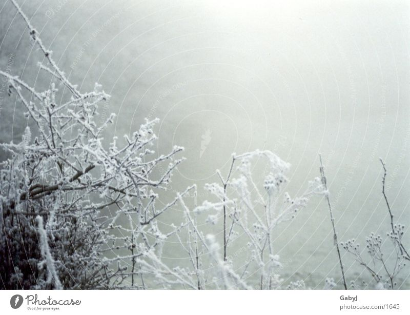 White Winter Calm Cold Ice Fog Branch Snowscape Express train Hoar frost