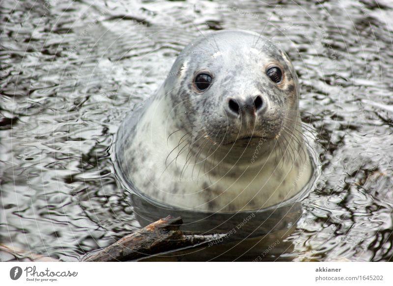 Nature Water Ocean Animal Winter Environment Eyes Natural Coast Gray Swimming & Bathing Ice Free Wild animal Wet Elements