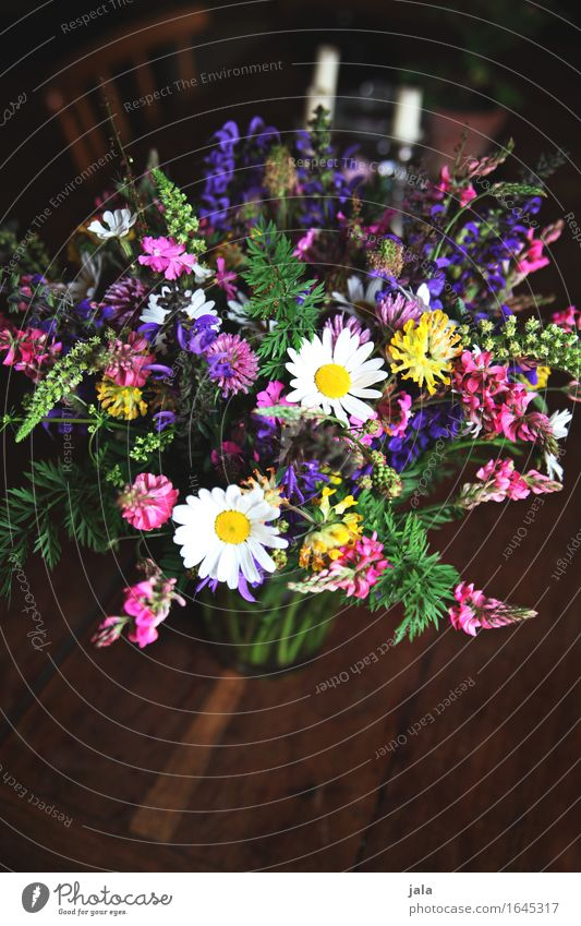 wild thing Living or residing Table Nature Plant Flower Bouquet Simple Fresh Beautiful Natural Wild Multicoloured Spring fever Colour photo Interior shot