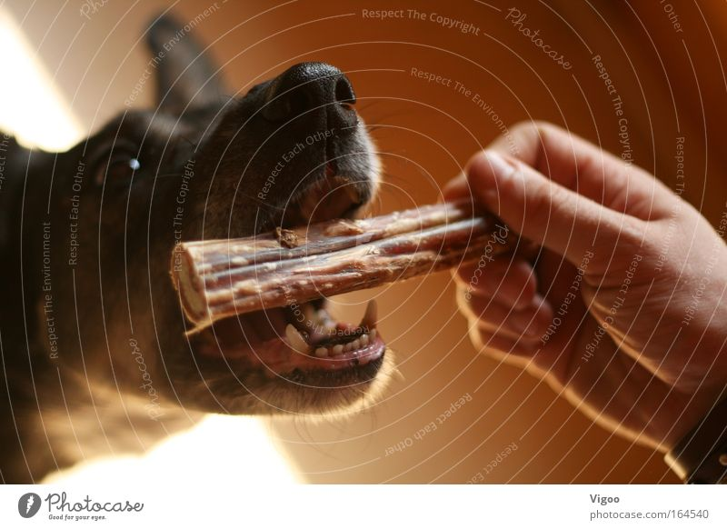 treat Colour photo Interior shot Close-up Shallow depth of field Animal portrait Pet Dog Animal face 1 Sympathy Love of animals Disciplined Voracious reward
