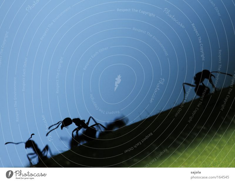 aliens Exterior shot Copy Space top Neutral Background Silhouette Animal portrait Ant Insect Feeler 3 Group of animals Work and employment Looking Blue Black