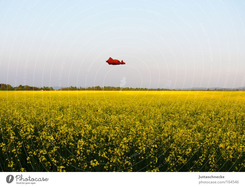 Nature Green Summer Yellow Spring Freedom Landscape Contentment Orange Field Environment Flying Horizon Growth T-shirt
