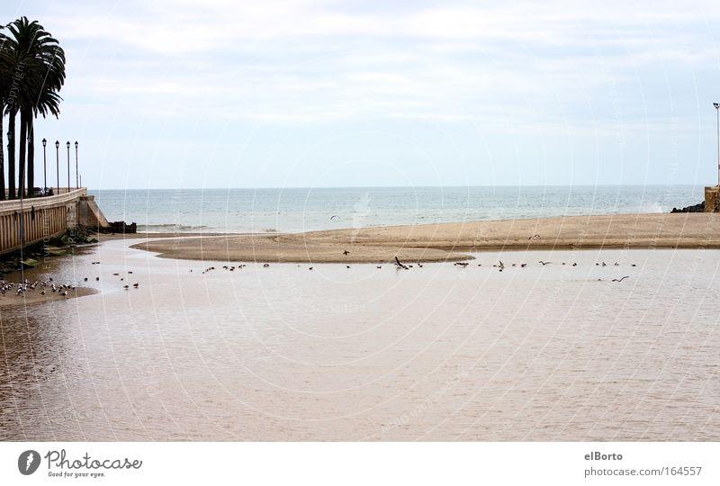 Sky Nature Vacation & Travel Summer Water Ocean Landscape Far-off places Beach Environment Coast Freedom Bird Sand Horizon Tourism