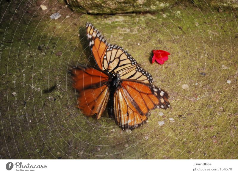 White Black Animal Yellow Colour Emotions Brown Together Pair of animals Small Might In pairs To fall Anger Zoo Butterfly