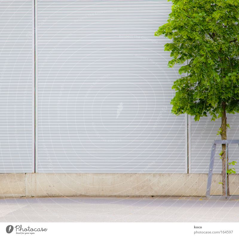 tree-like Colour photo Exterior shot Deserted Copy Space left Day Deep depth of field Spring Tree Places Wall (barrier) Wall (building) Concrete Wood Metal