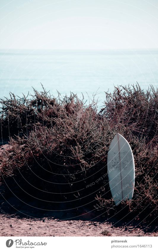 plonked down Environment Esthetic Surfing Surfer Surfboard Surf school Beach Beach life Vacation & Travel Vacation photo Vacation mood Summer Summer vacation