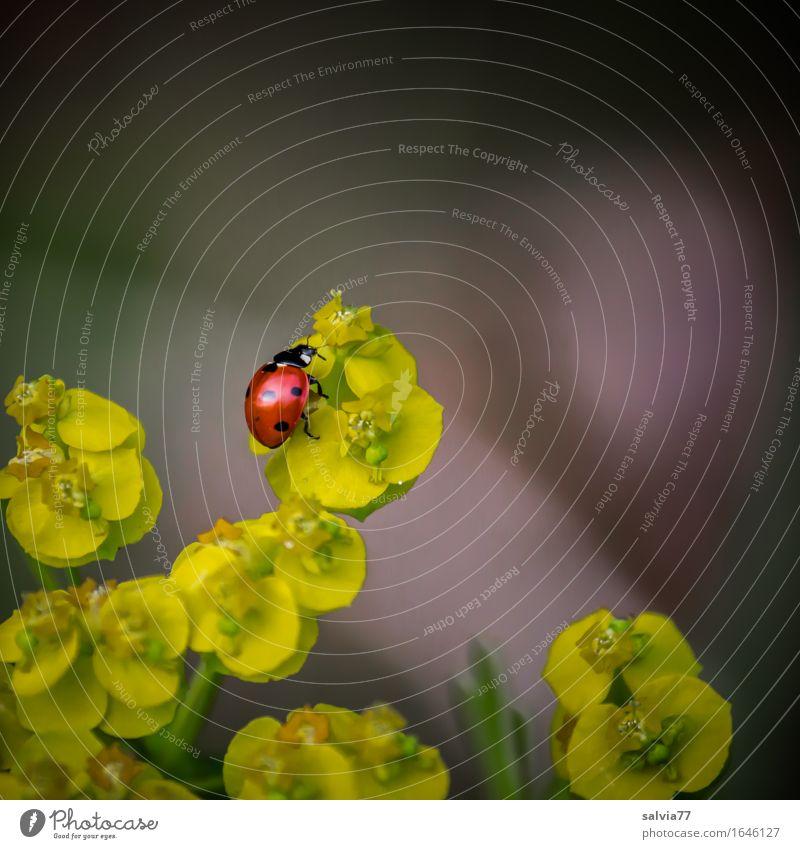 Nature Plant Summer Flower Red Animal Black Yellow Blossom Spring Happy Gray Above Wild animal Joie de vivre (Vitality) Hope