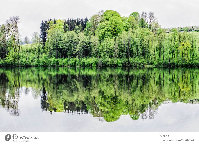 duplicate Landscape Elements Water Spring Tree Lakeside Water reflection Surface of water Fresh Green Calm Idyll Nature Arrangement Comforting In pairs Symmetry