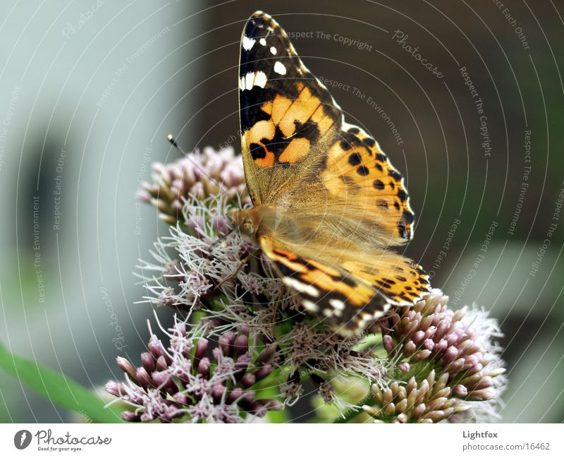 Nature Beautiful Colour Environment Wing Insect Butterfly Small tortoiseshell