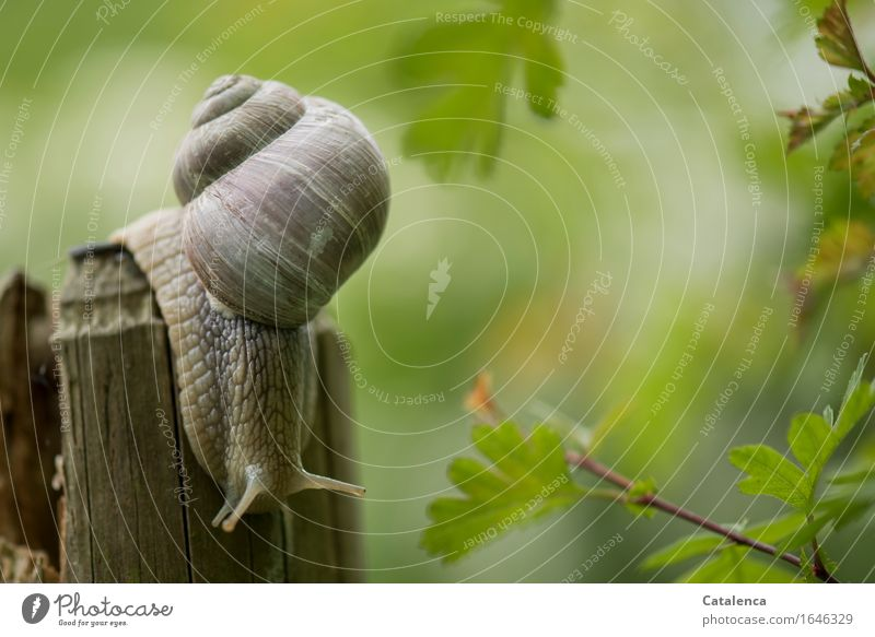 fluffy : green fluffy light Nature Animal Summer Plant Hawthorn Garden Meadow Wild animal Snail 1 Touch Movement Cold Brown Green Environment