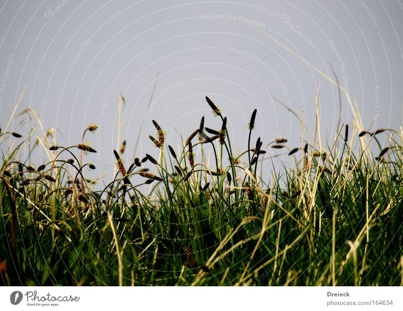 Straw(a) Colour photo Exterior shot Day Worm's-eye view Nature Plant Spring Grass Foliage plant Park Meadow Blossoming Blue Yellow Green Fragrance Relaxation