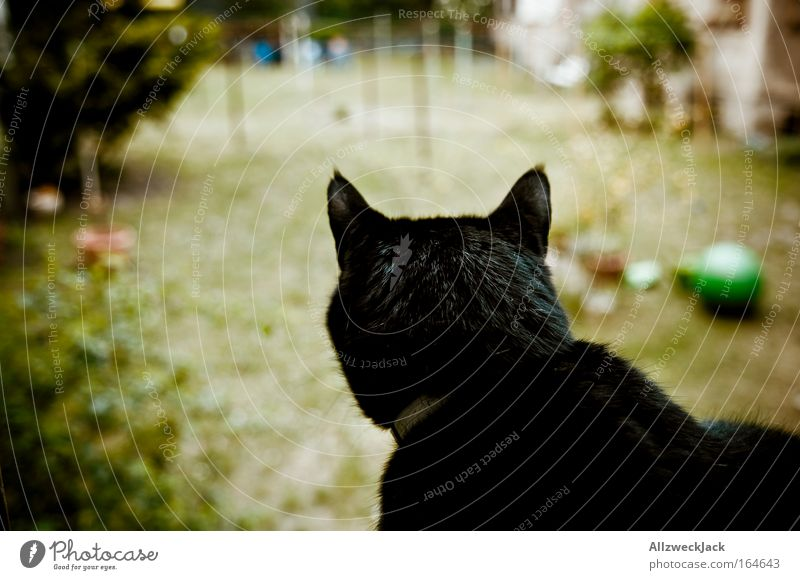 Animal Cat Observe Watchfulness Pet Black-haired Domestic cat Attentive Cat's head Contour Cat's ears