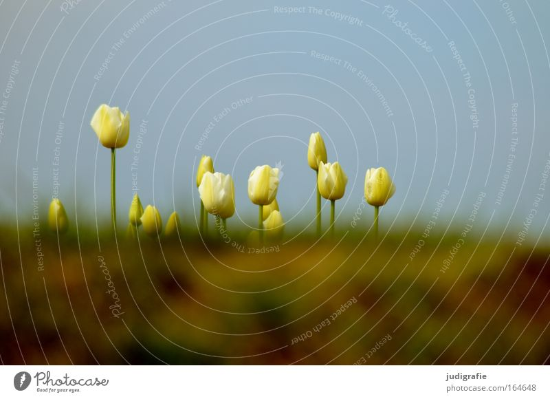 meadow Exterior shot Deserted Copy Space top Copy Space bottom Worm's-eye view Environment Nature Plant Sky Cloudless sky Spring Beautiful weather Flower Grass