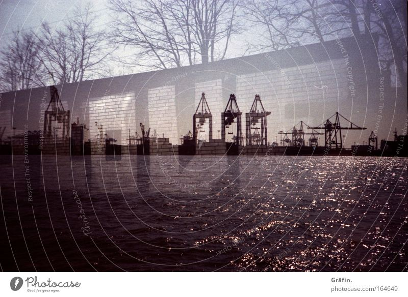 Water Tree Graffiti Glittering Hamburg Industry Harbour Letters (alphabet) Wanderlust Crane Double exposure Elbe