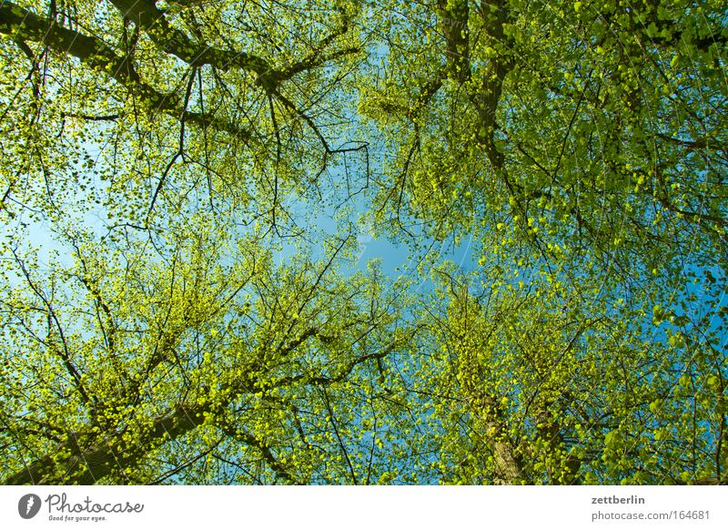Spring again Colour photo Deserted Copy Space Worm's-eye view Environment Nature Plant Sky Beautiful weather Tree Leaf Forest Friendliness Happiness Happy Large